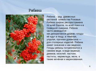* Рябина Рябина -род древесных растений семействаРозовые. Рябина широко