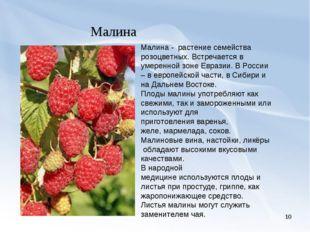 * Малина Малина - растение семейства розоцветных. Встречается в умеренной зон