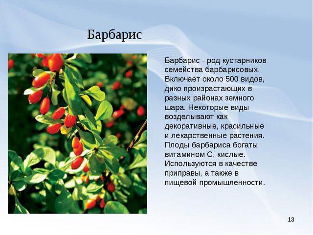 * Барбарис Барбарис - род кустарников семейства барбарисовых. Включает около...