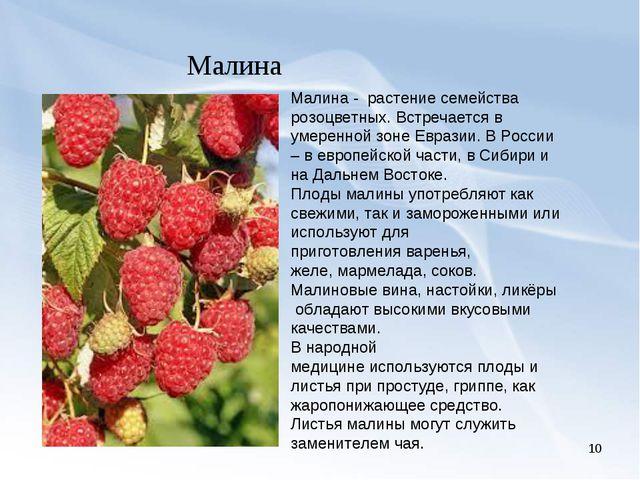 * Малина Малина - растение семейства розоцветных. Встречается в умеренной зон...