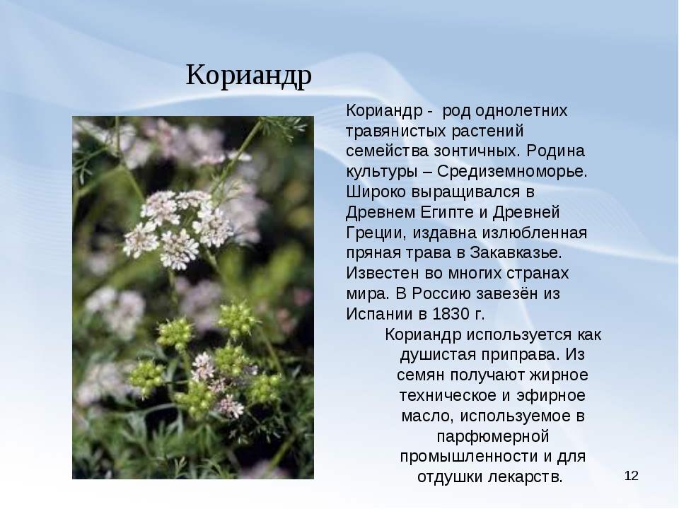 * Кориандр Кориандр - род однолетних травянистых растений семейства зонтичных...