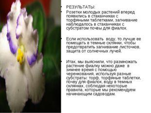 РЕЗУЛЬТАТЫ: Розетки молодых растений вперед появились в стаканчиках с торфяны