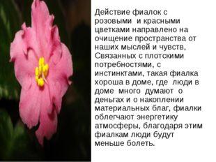 Действие фиалок с розовыми и красными цветками направлено на очищение простра