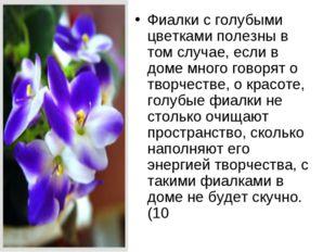 Фиалки с голубыми цветками полезны в том случае, если в доме много говорят о
