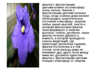 фиалки с фиолетовыми цветамивлияют на атмосферу очень сильно. Фиалка с фиоле