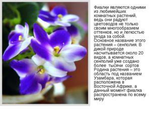 Фиалки являются одними из любимейших комнатных растений, ведь они радуют цвет