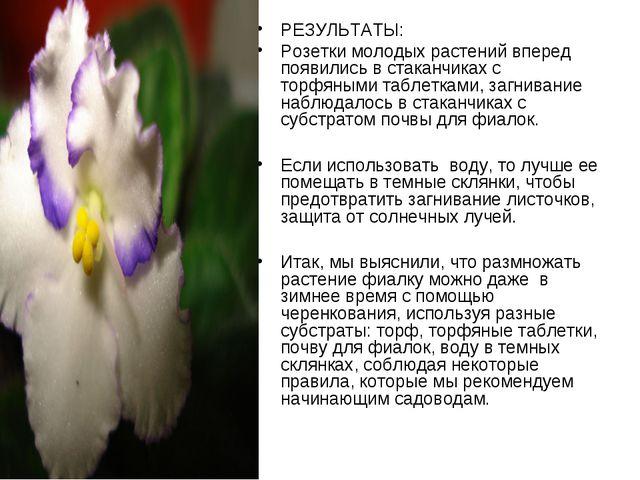 РЕЗУЛЬТАТЫ: Розетки молодых растений вперед появились в стаканчиках с торфяны...