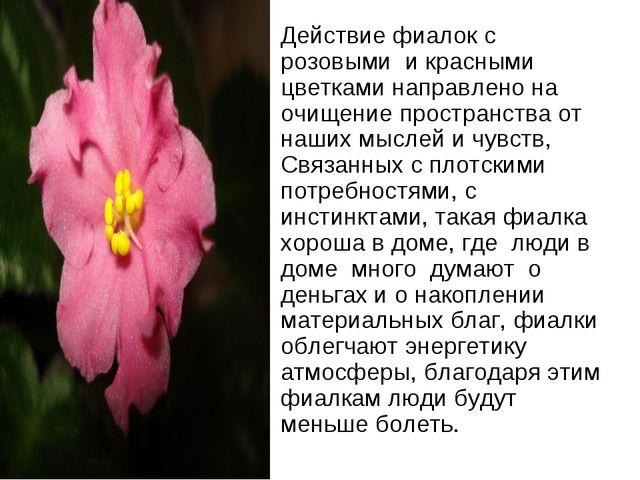 Действие фиалок с розовыми и красными цветками направлено на очищение простра...