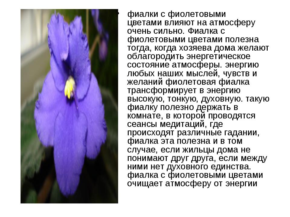 фиалки с фиолетовыми цветамивлияют на атмосферу очень сильно. Фиалка с фиоле...