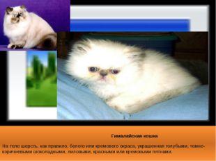 Гималайская кошка На теле шерсть, как правило, белого или кремового окраса,