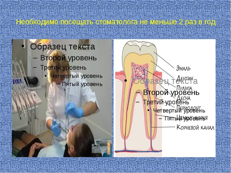 Необходимо посещать стоматолога не меньше 2 раз в год