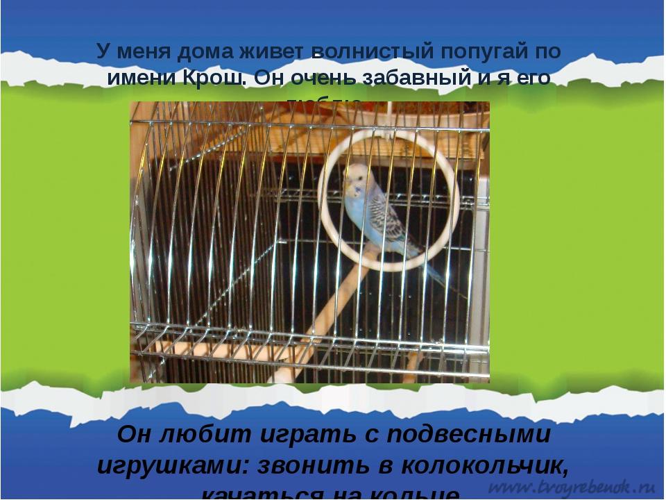 У меня дома живет волнистый попугай по имени Крош. Он очень забавный и я его...