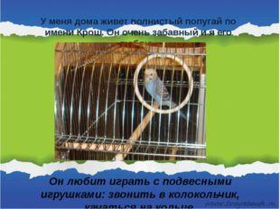 У меня дома живет волнистый попугай по имени Крош. Он очень забавный и я его