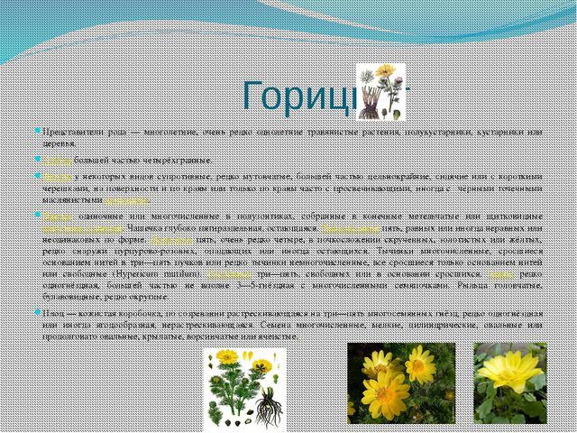 Горицвет Представители рода — многолетние, очень редко однолетние травянисты...