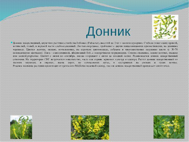 Донник Донник лекарственный, двулетнее растение семейства бобовых (Fabaceae)...