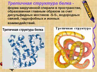 Третичная структура белка - форма закрученной спирали в пространстве, образо