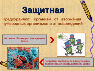 Защитная Например, фибриноген и протромбин обеспечивают свертываемость крови