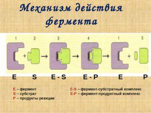 Механизм действия фермента Е S E - S E - P Е P E – фермент Е-S – фермент-субс