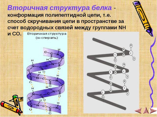 Вторичная структура белка - конформация полипептидной цепи, т.е. способ скру...