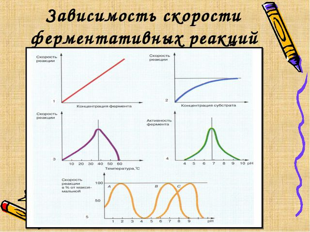 Зависимость скорости ферментативных реакций