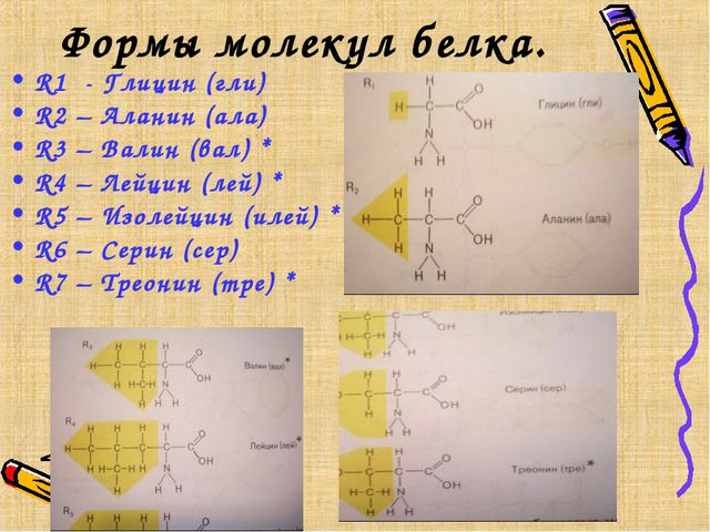 Формы молекул белка. R1 - Глицин (гли) R2 – Аланин (ала) R3 – Валин (вал) * R...
