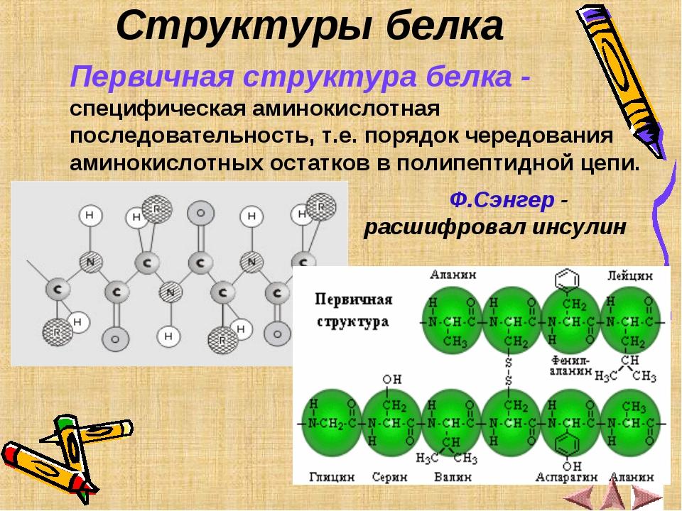 Структуры белка Первичная структура белка - специфическая аминокислотная посл...