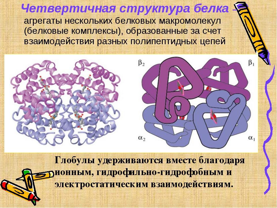 Четвертичная структура белка – агрегаты нескольких белковых макромолекул (бе...