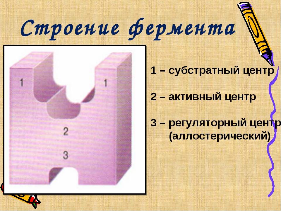 Строение фермента 1 – субстратный центр 2 – активный центр 3 – регуляторный ц...