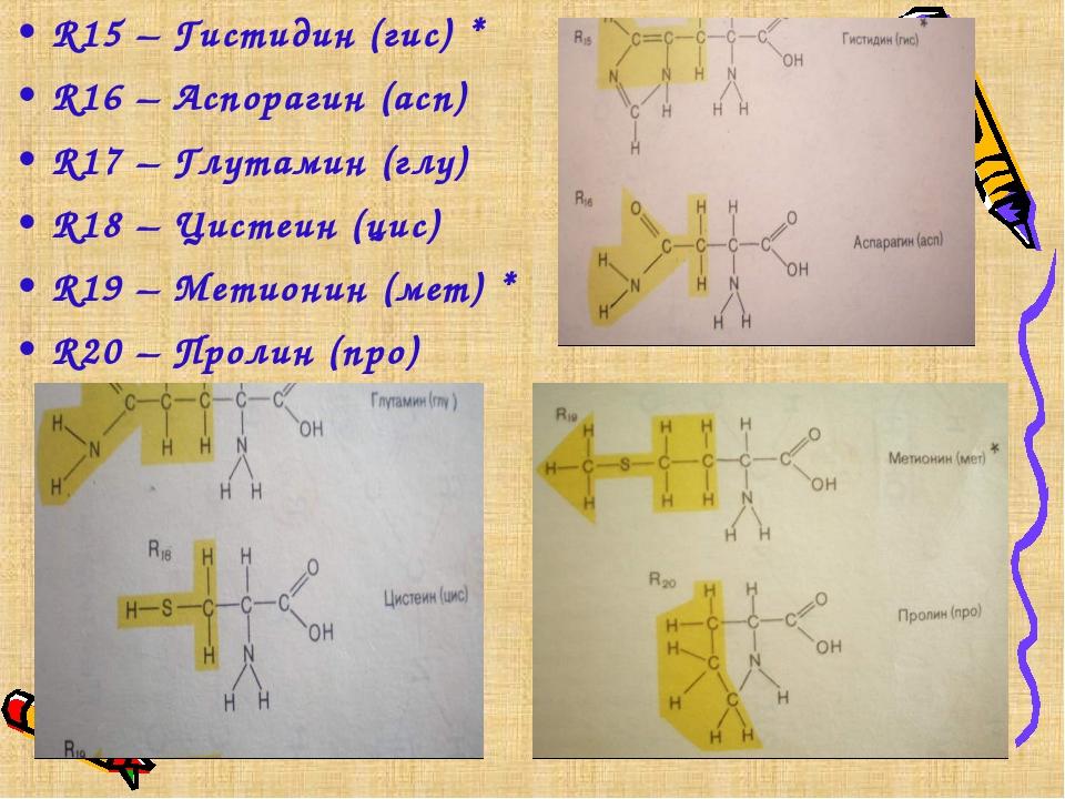 R15 – Гистидин (гис) * R16 – Аспорагин (асп) R17 – Глутамин (глу) R18 – Цисте...