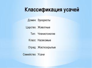 Классификация усачей Домен: Эукариоты Царство: Животные Тип: Членистоногие
