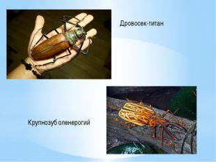 Дровосек-титан Крупнозуб оленерогий