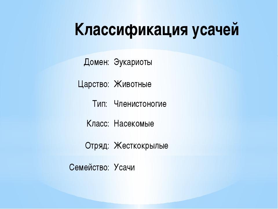Классификация усачей Домен: Эукариоты Царство: Животные Тип: Членистоногие...