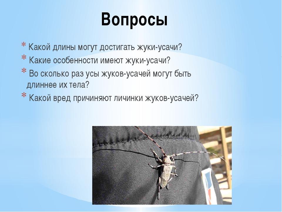 Вопросы Какой длины могут достигать жуки-усачи? Какие особенности имеют жуки-...