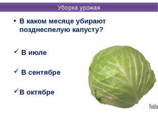 В каком месяце убирают позднеспелую капусту? В июле В сентябре В октябре Убор
