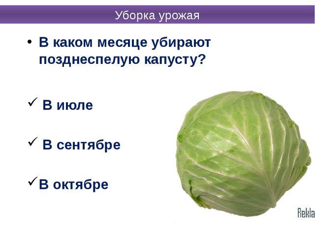 В каком месяце убирают позднеспелую капусту? В июле В сентябре В октябре Убор...