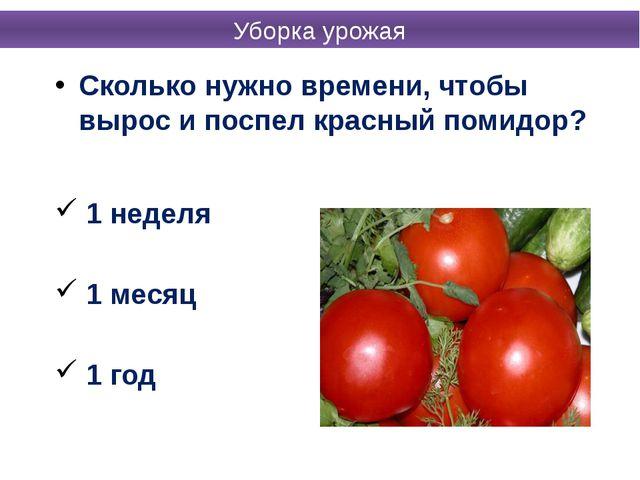 Сколько нужно времени, чтобы вырос и поспел красный помидор? 1 неделя 1 месяц...