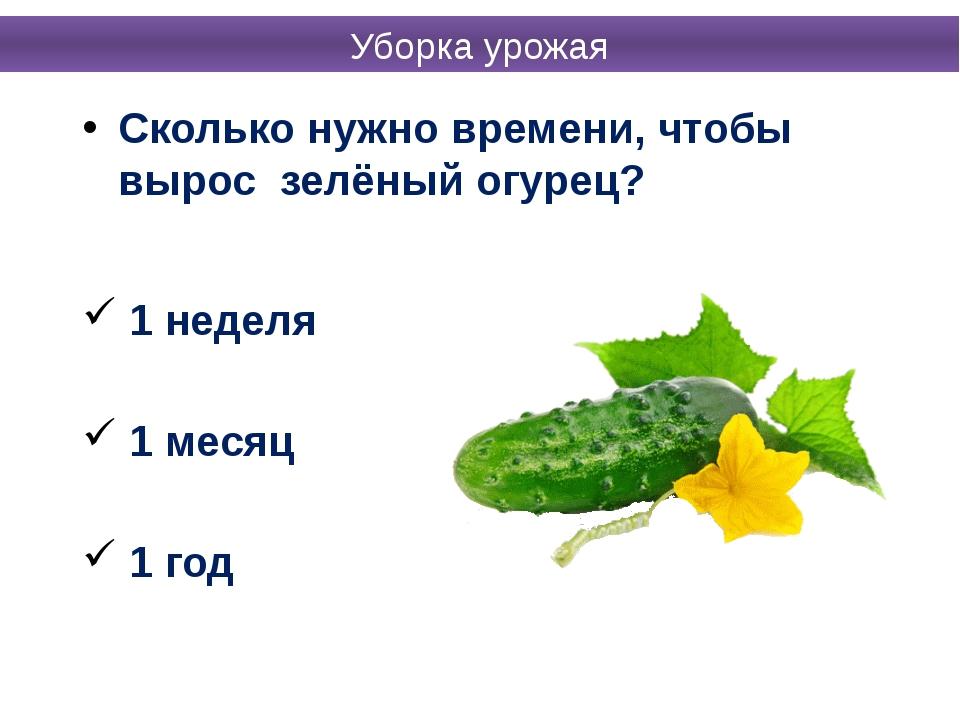 Сколько нужно времени, чтобы вырос зелёный огурец? 1 неделя 1 месяц 1 год Убо...