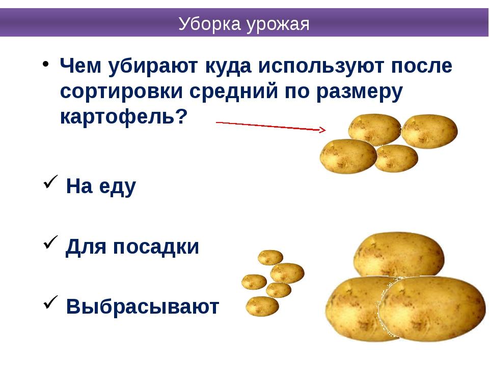 Чем убирают куда используют после сортировки средний по размеру картофель? На...