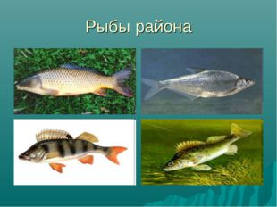 Рыбы района