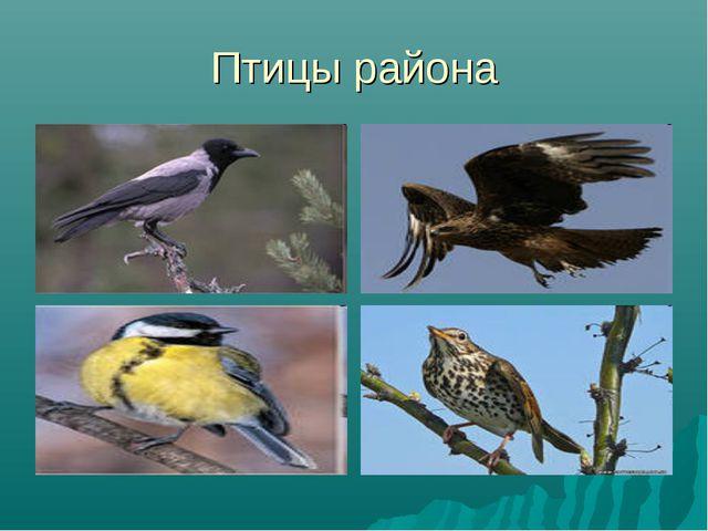 Птицы района