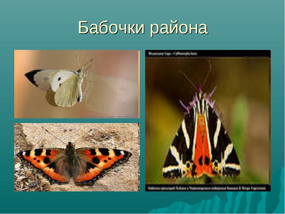 Бабочки района