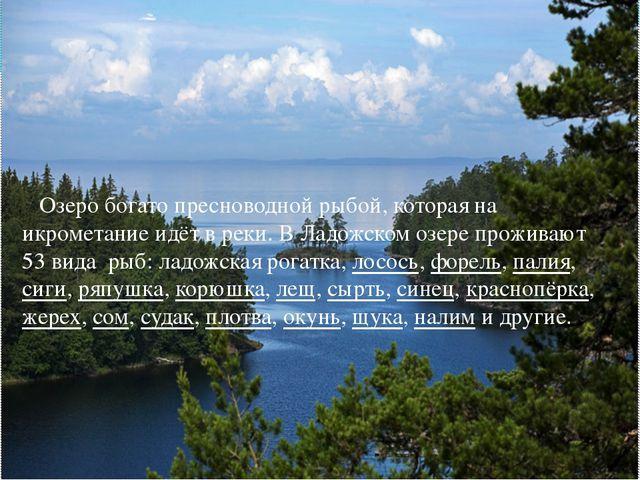 Озеро богато пресноводной рыбой, которая на икрометание идёт в реки. В Ладож...