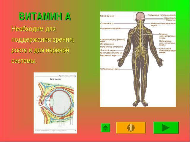 ВИТАМИН А Необходим для поддержания зрения, роста и для нервной системы.