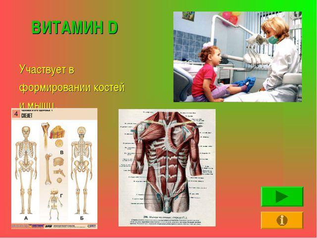 ВИТАМИН D Участвует в формировании костей и мышц.