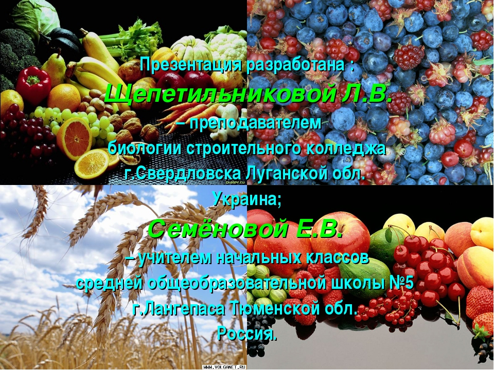 Презентация разработана : Щепетильниковой Л.В. – преподавателем биологии стр...