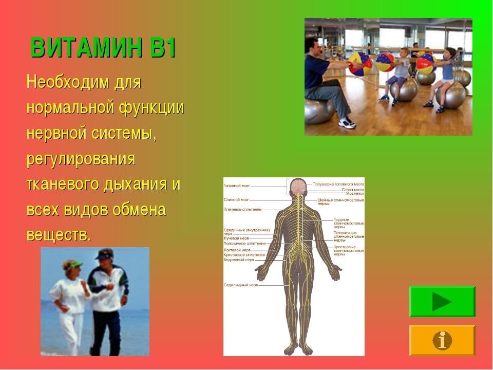 ВИТАМИН В1 Необходим для нормальной функции нервной системы, регулирования тк...