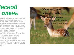 Лесной олень Величина оленей может быть в пределах где-то от величины зайца