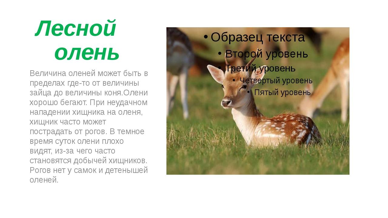 Лесной олень Величина оленей может быть в пределах где-то от величины зайца...