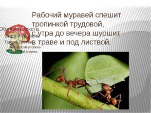 Рабочий муравей спешит тропинкой трудовой, с утра до вечера шуршит в траве и