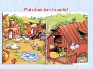What animals live in the country?